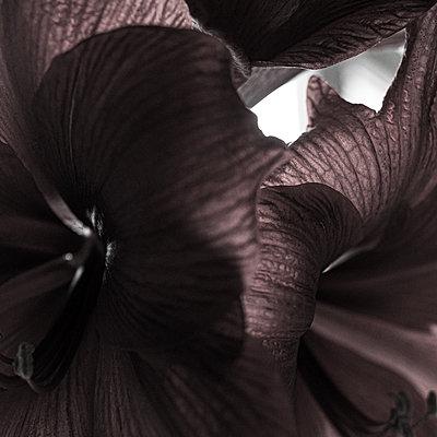 Petals, macro photography - p1624m2223741 by Gabriela Torres Ruiz