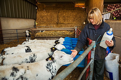 Woman holding a feeding bottle standing in a stable, next to a pen with black and white calves. - p1100m1450917 by Mint Images