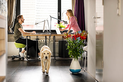 Man and woman with dog working at desk at home - p300m1535232 by Peter Scholl