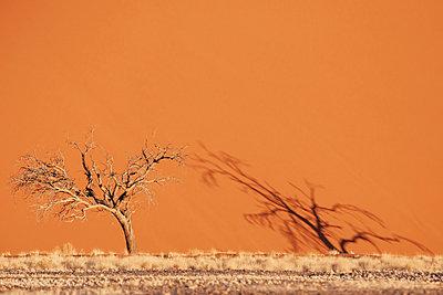 Namib - p1065m885969 by KNSY Bande