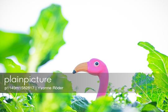 Flamingo im Gemüsegarten - p1149m1582817 von Yvonne Röder