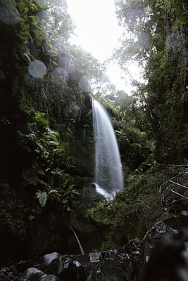 Scenic view of waterfall in forest - p1166m2248840 by Cavan Images