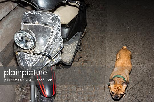Hund und Roller - p1177m1159704 von Philip Frowein