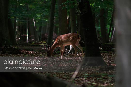 Hirsch im Stadtwald - p417m1057286 von Pat Meise