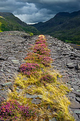 Grass and Heather Path in Disused Slate Quarry in Mountains - p1072m993540 by chinch gryniewicz
