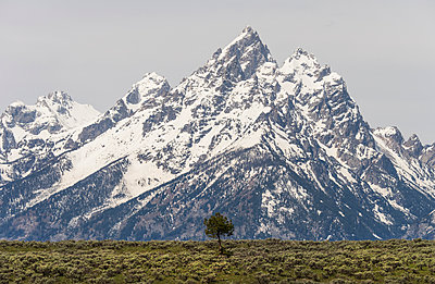 A snow covered mountain range in the Grand Teton national park. - p1100m929146f by David Schultz
