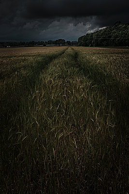 Close Up of Lines in Winchester Field - p1166m2205731 by Cavan Images