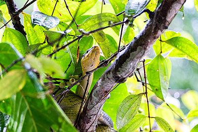 Schlange auf einem Baum - p842m1558880 von Renée Del Missier
