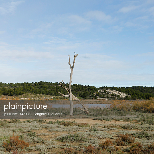Lake and dead tree - p1105m2145172 by Virginie Plauchut