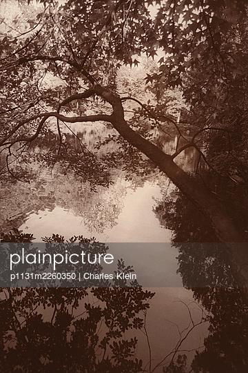 Silent lake - p1131m2260350 by Charles Klein