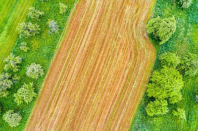 Germany, Baden-Wuerttemberg, Rems-Murr-Kreis, field - p300m1587551 by Stefan Schurr