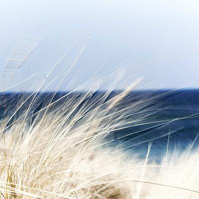 Dünengras im Wind - p4150528 von Tanja Luther