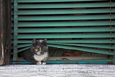 Cat on window sill in Venice, Italy - p4425746f by Design Pics
