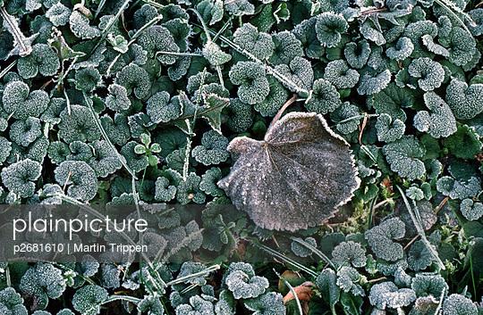 Bodenfrost - p2681610 von Martin Trippen