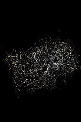 Spinnennetz - p248m908261 von BY