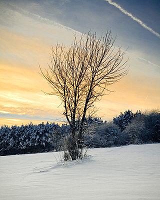 Winter - p9460056 von Maren Becker