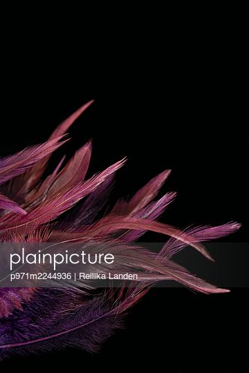 Feathers - p971m2244936 by Reilika Landen