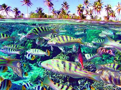 Schwarm exotischer Fische - p1542m2142265 von Roger Grasas