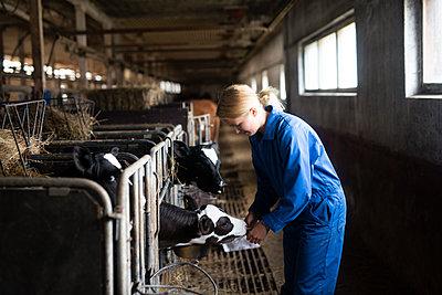 Woman feeding cows in barn - p312m2079557 by Anna Johnsson