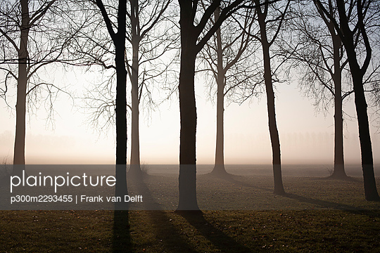 Bare trees at foggy sunrise - p300m2293455 by Frank van Delft