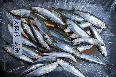 Ice-cooled fish at Tsukiji fish market - p1134m1440632 by Pia Grimbühler