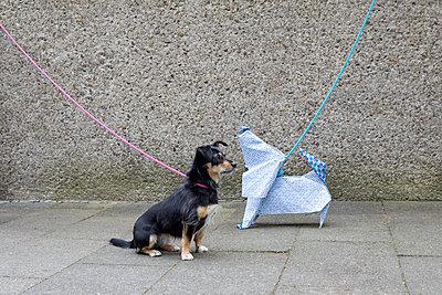 Blue origami dog and dog waiting - p300m2012948 von Petra Stockhausen
