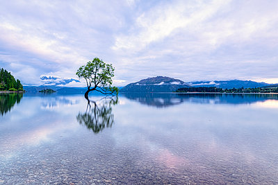 Lone Tree of Lake Wanaka against cloudy sky during sunset, South Island, New Zealand - p300m2144676 by Scott Masterton