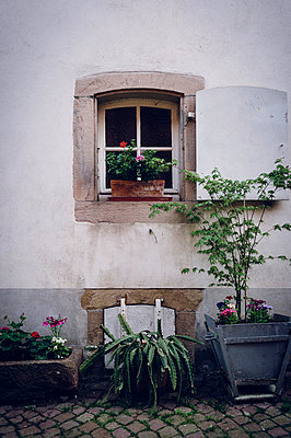 Window and flowers - p1088m907731 by Martin Benner