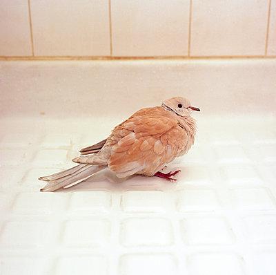 Dove - p1147m944386 by Laurent Askienazy