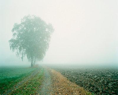 Fog - p3700048 by David Hartfiel