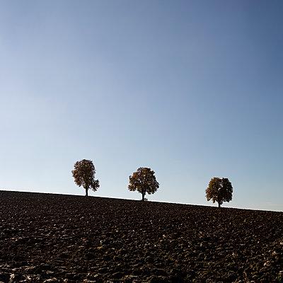 Drei Bäume - p552m1183228 von Leander Hopf