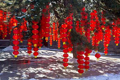 Lampions an einem Baum - p817m2159117 von Daniel K Schweitzer