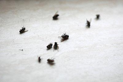 Dead flies - p902m754353 by Mölleken