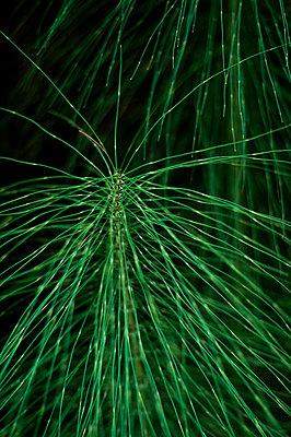 Ornamental grass - p947m2209418 by Cristopher Civitillo