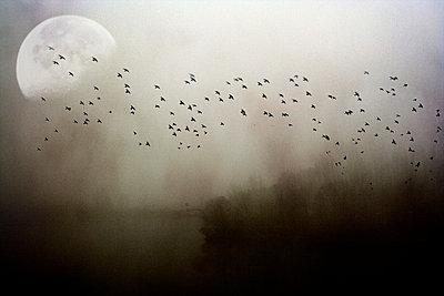 Sumpf Im Vollmond - p9792106 von Jaeckel