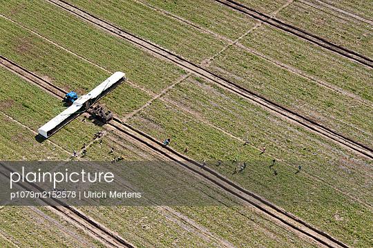 Germany, Cucumber harvesting machine at work - p1079m2152578 by Ulrich Mertens
