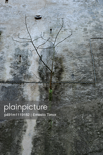 Sapling grows on concrete area - p491m1119182 by Ernesto Timor