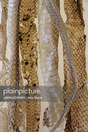 Snake skins - p969m2290861 by Alix Marie