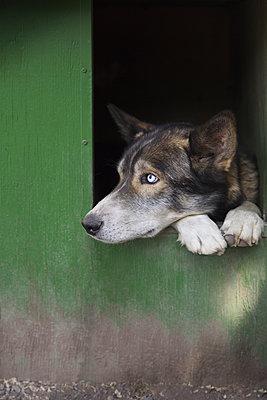 Dog looking away while peeking through window at Banff National Park - p1166m2025234 by Cavan Social