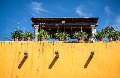 Agapanthus plants on house roof, Mexico - p1170m1573340 by Bjanka Kadic
