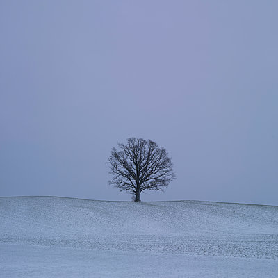 Single tree and fresh snow - p552m1510388 by Leander Hopf
