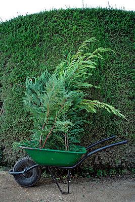 Gardening - p8850280 by Oliver Brenneisen