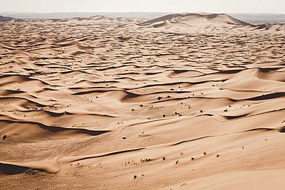 Sahara - p1150m1208971 by Elise Ortiou Campion