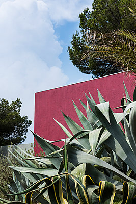 Agave plant next to red wall - p954m1585923 by Heidi Mayer