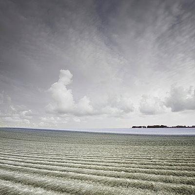 Feld in der Normandie - p1137m939524 von Yann Grancher