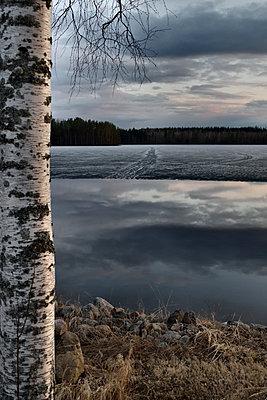 Birke an einem Seeufer im Winter - p1235m1538154 von Karoliina Norontaus