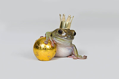 The frog prince and gold ball, studio shot - p3019503f by Paul Hudson
