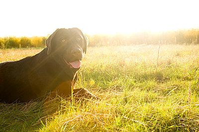 Hund auf Wiese - p2683973 von I. Miczka
