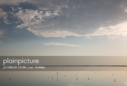 Silhouette birds in lake against sky during sunset - p1166m2112196 by Luc  Kordas