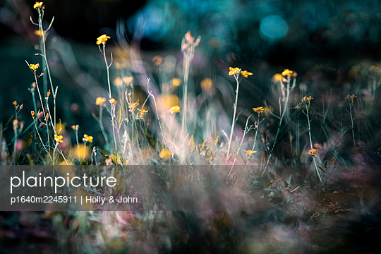 Meadow with yellow flowers - p1640m2245911 by Holly & John